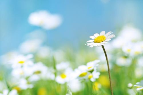 Honingzalf_ Karin Janssen Kindigo therapie blog